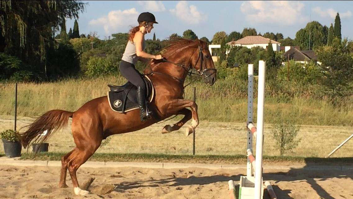 Little Mischiff jumping